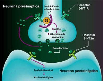 4.- Los Neurotransmisores